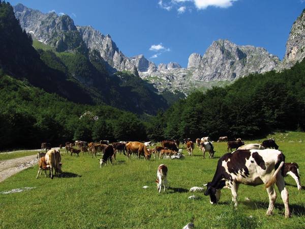 Agriculture kosovo